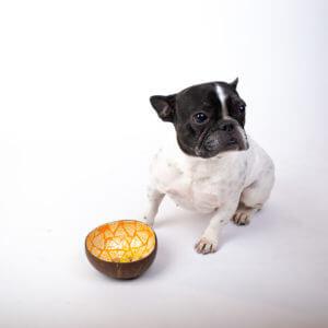 Kokosnussschale mit gelbem Dreieck-Muster vor einem kleinen Hund